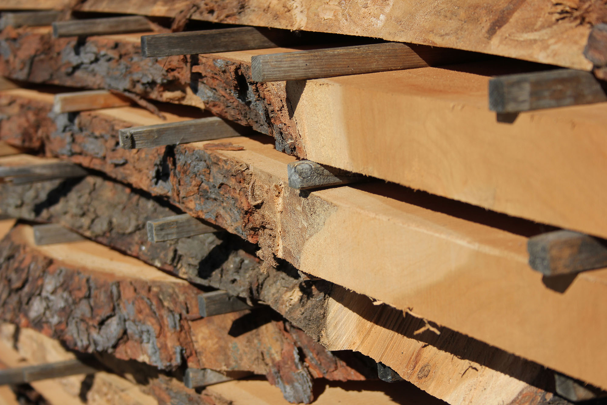 Sawmill & Kiln Drying - Horigan Urban Forest Products